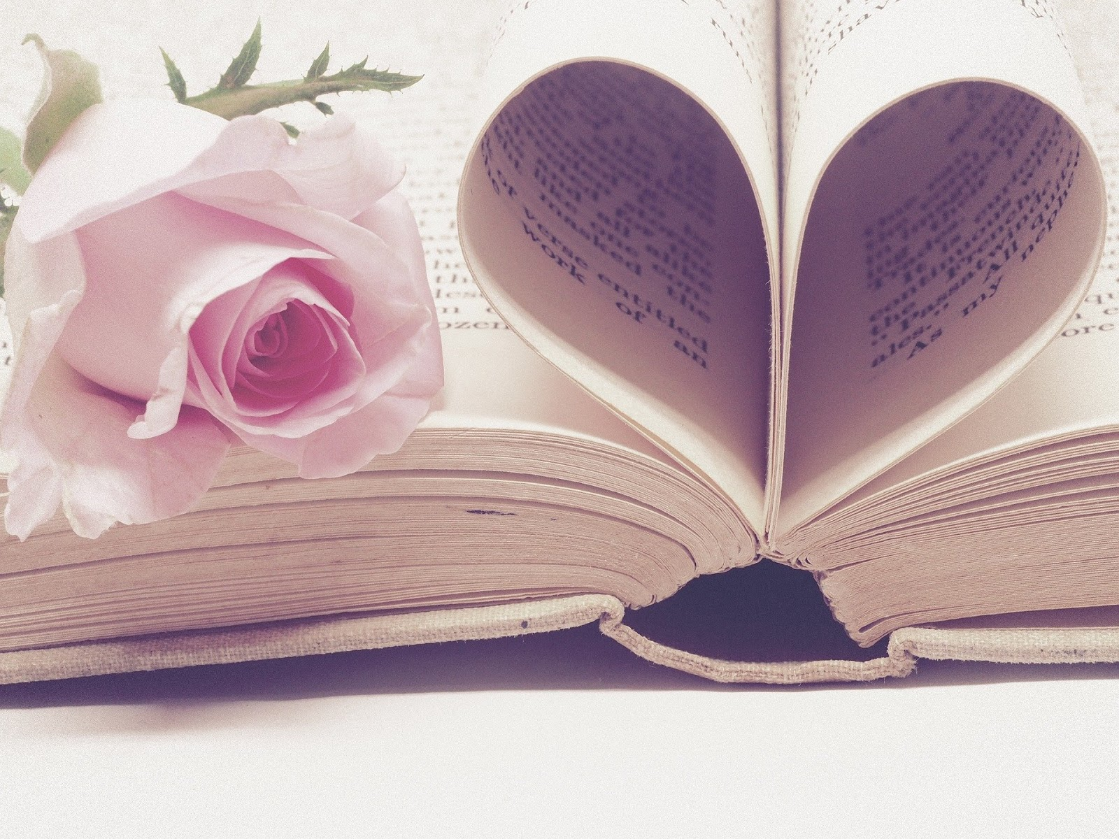 Pink rose on a book with heart pages